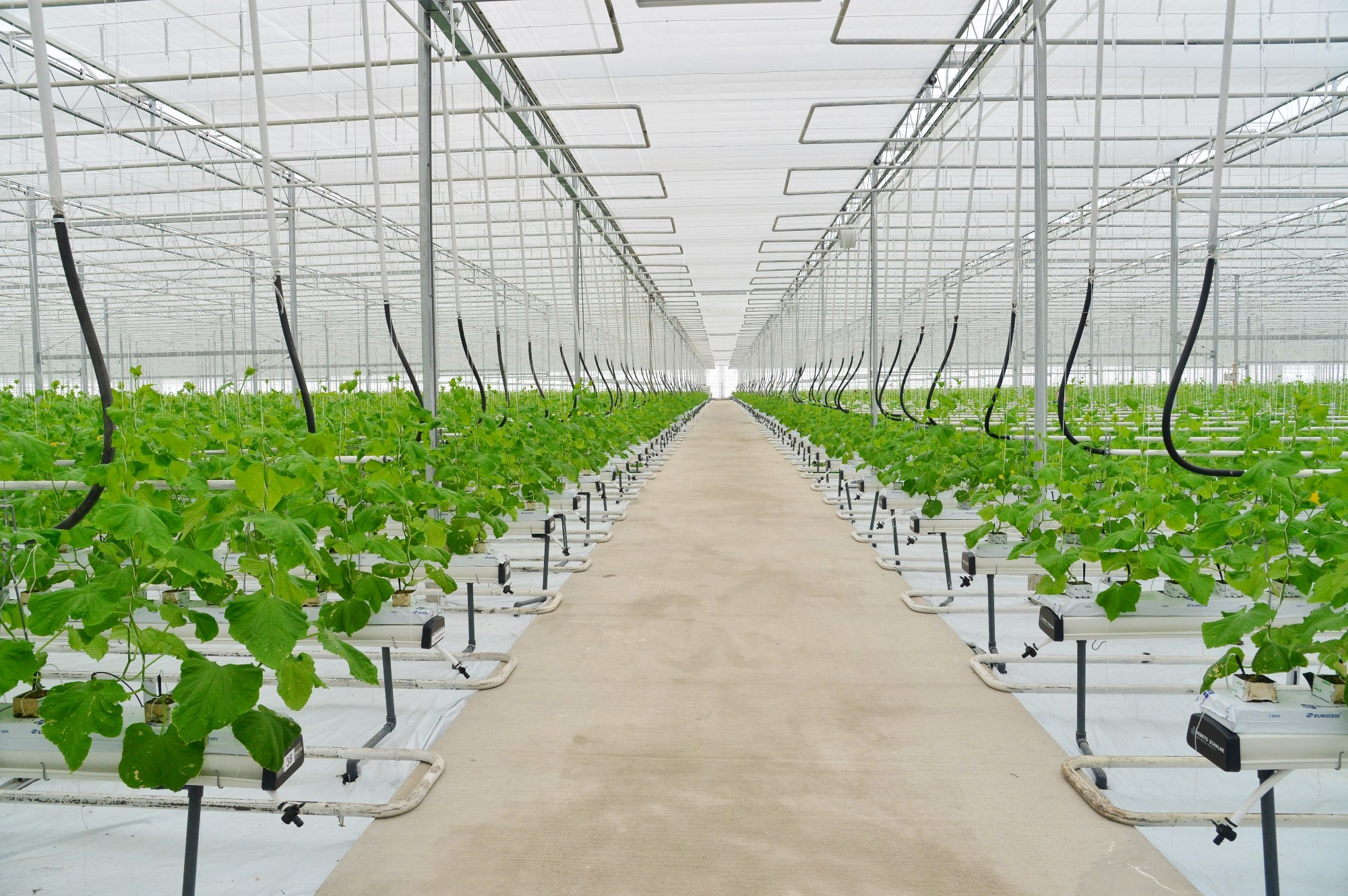 Выращивание овощей в закрытом грунте оквэд 86