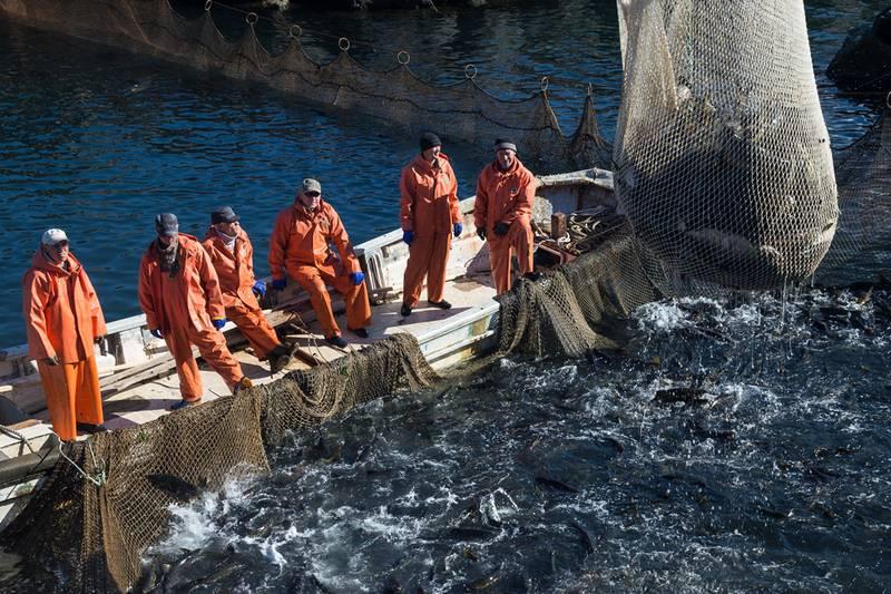 сайт курильский рыбак официальный сайт